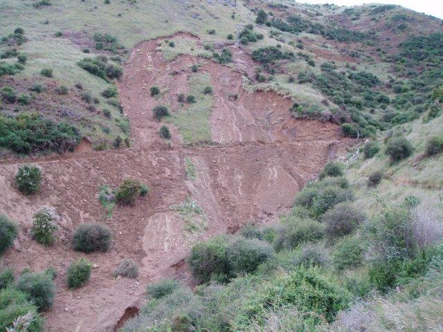 Close-up of Kahikatea gully slip Dec 2011