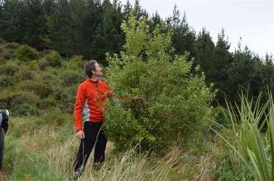Jonathan with 2m lemonwood on roadside-400